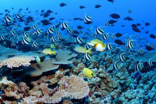 Gohagan_2020_CostaRicaPanama_08_CostaRica_CoralReef_WikimediaPedia
